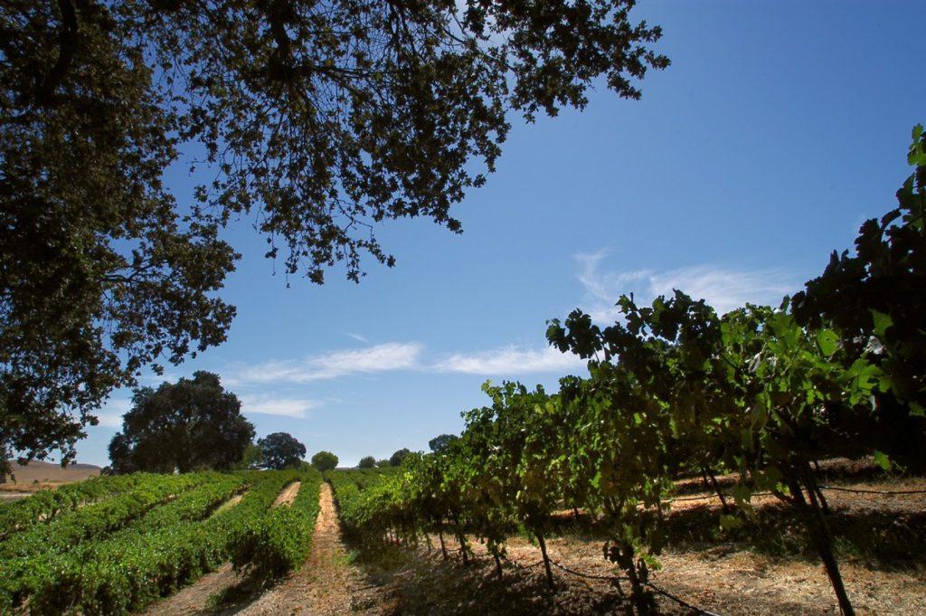 Vineyard main shot